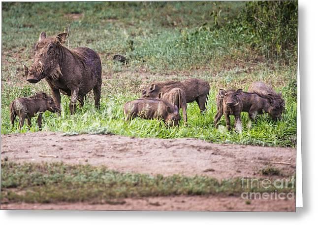 Warthogs Near A Water Hole In Tarangire National Park In Tanzani Greeting Card by Mariusz Prusaczyk