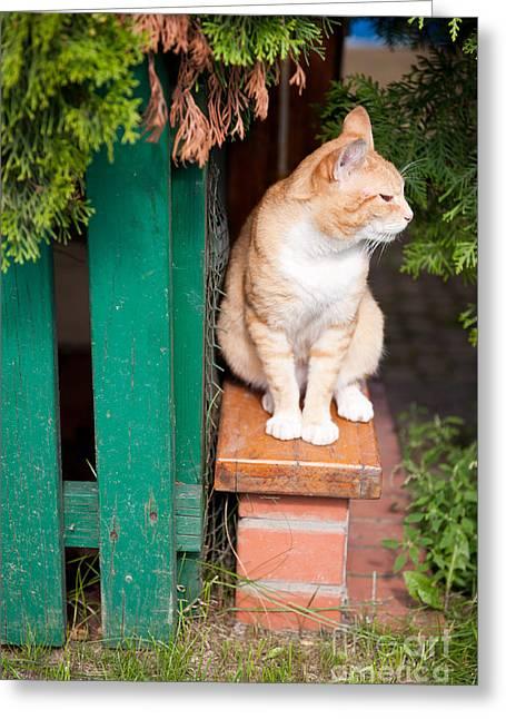 Wary Stray Waif Cat Sitting Greeting Card