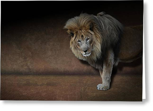 Greeting Card featuring the photograph Was That My Cue? - Lion On Stage by Debi Dalio
