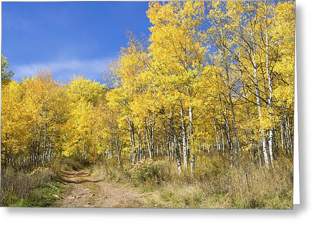 Wasatch Fall Greeting Card by Chad Dutson