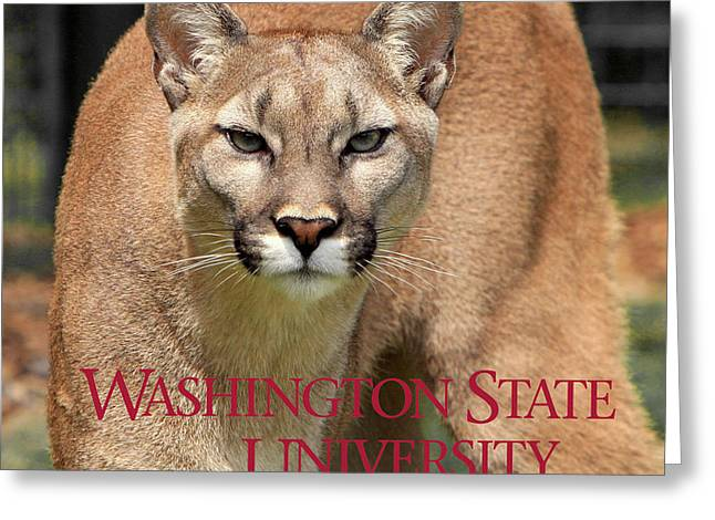 Washington State University Cougar Greeting Card by Daniel Hagerman