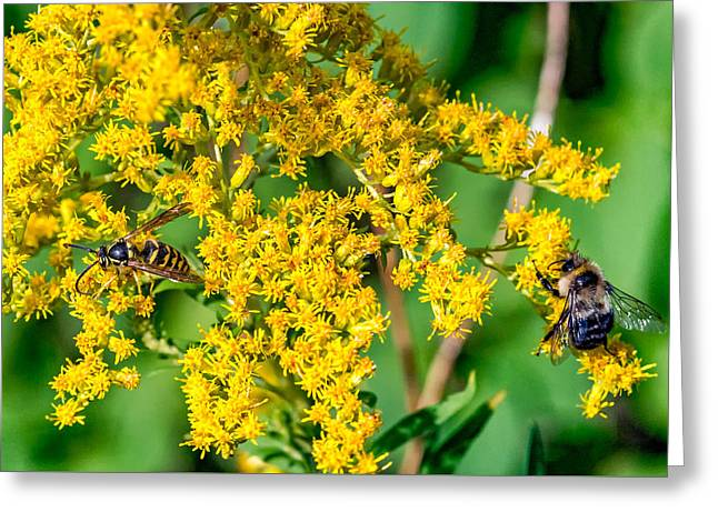 Wasp And Bee Business Greeting Card by Steve Harrington