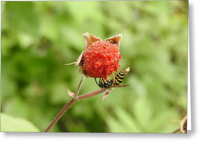 Wasp And Berry Greeting Card