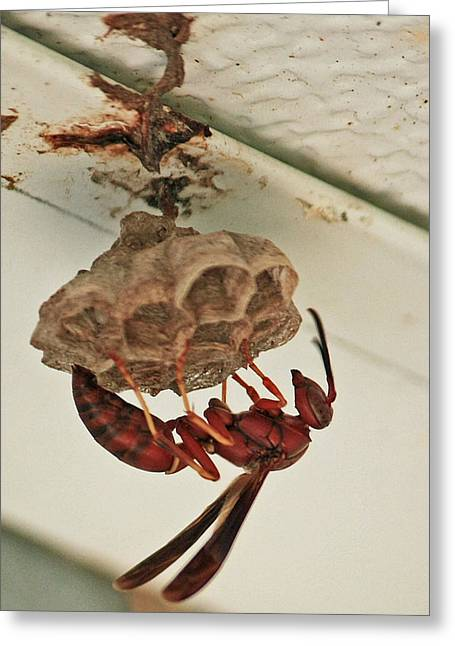 Mud Nest Greeting Cards - Wasp at Work Greeting Card by Terri Mills