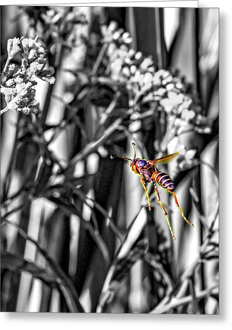 Wasp Flight Sc Greeting Card by Steve Harrington
