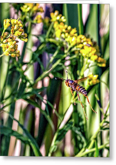 Wasp Flight Greeting Card by Steve Harrington