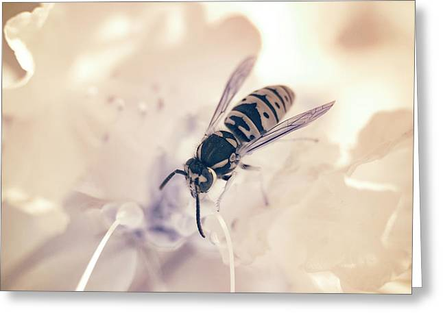 Greeting Card featuring the photograph Wasp In Ir by Brian Hale