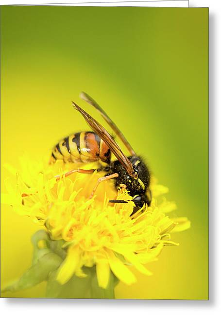 Wasp Greeting Card by Jouko Mikkola