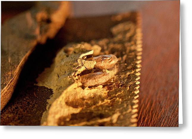 Wasp Larvae And Handsaw Greeting Card by Wilma  Birdwell