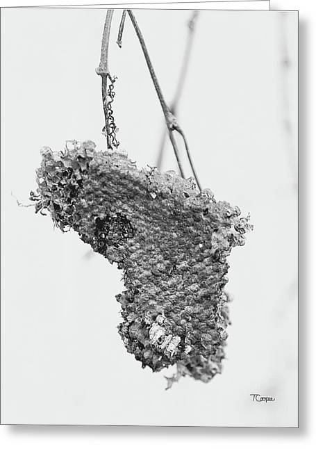 Wasp Nest Heart Greeting Card