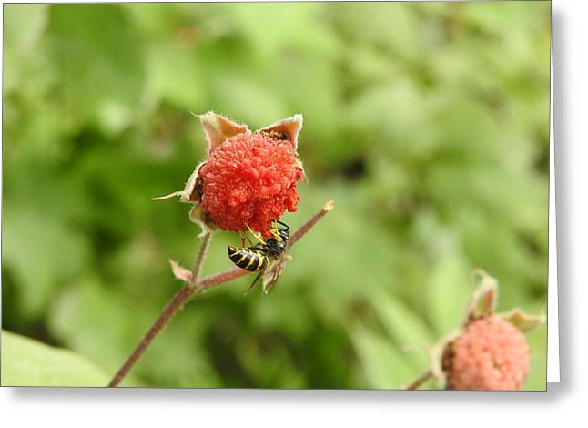 Wasp Greeting Card