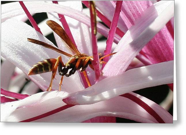 Wasp On Flower Greeting Card by Francesco Roncone