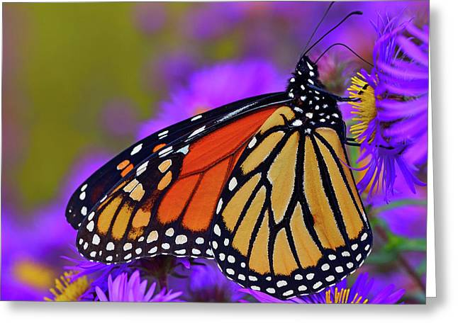 Watch Your Aster Greeting Card