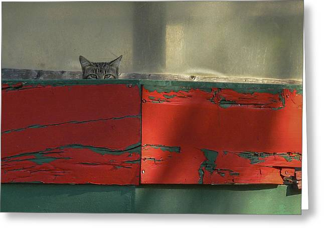 Watchful Cat Greeting Card