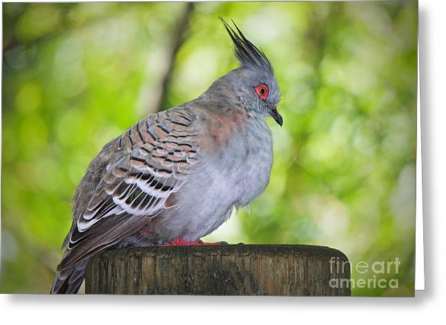 Watchful Eye Greeting Card by Judy Kay