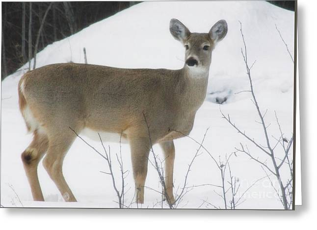 Watchful Eye Of The Doe Greeting Card