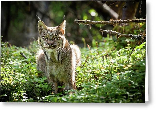 Watchful Mama Lynx Greeting Card