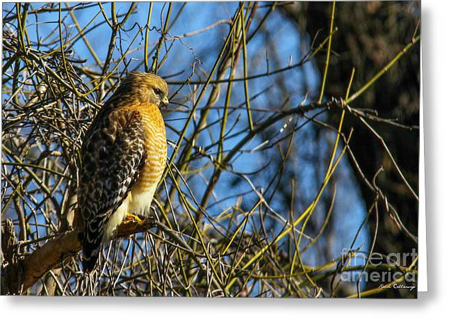 Watchfully Hungry Coopers Hawk Art Greeting Card