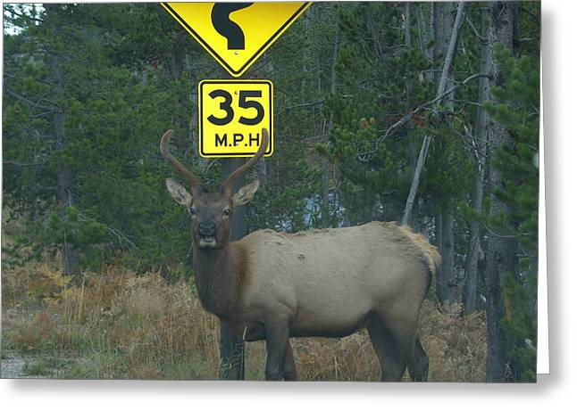 Watching For Speeders Greeting Card