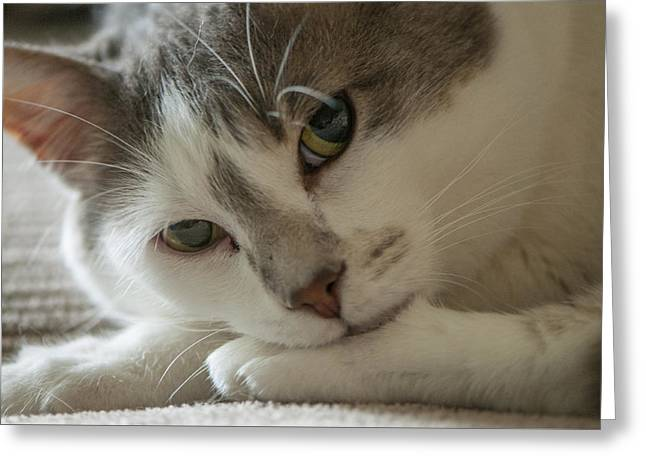 Watching Me, Watching You Greeting Card