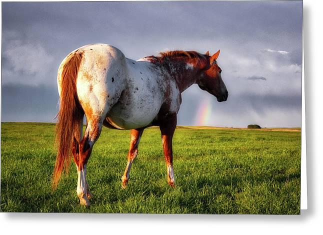 Watching The Rainbow Greeting Card