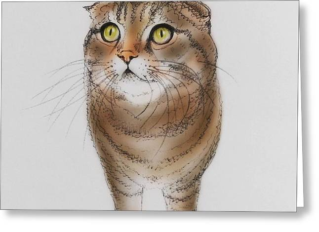 Watching The Snow Falling Greeting Card by Pookie Pet Portraits