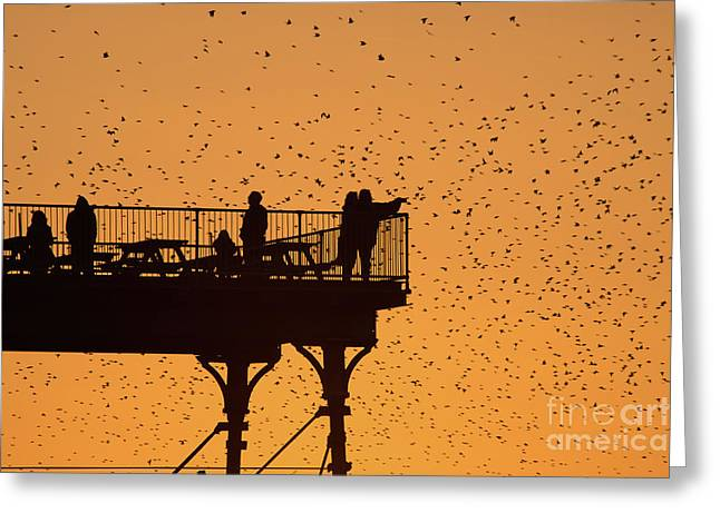 Watching The Sunset And Starlings In Aberystwyth Wales Greeting Card