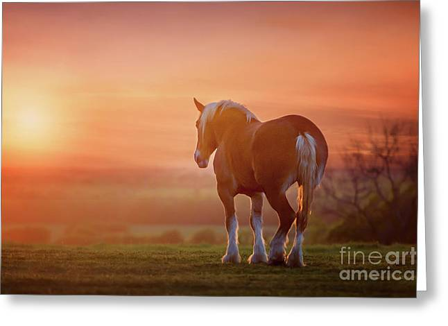 Watching The Sunset Greeting Card by Tamyra Ayles