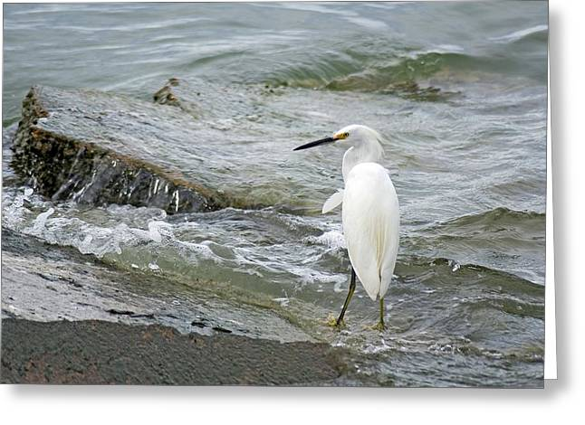 Watching The Tide Come In Greeting Card