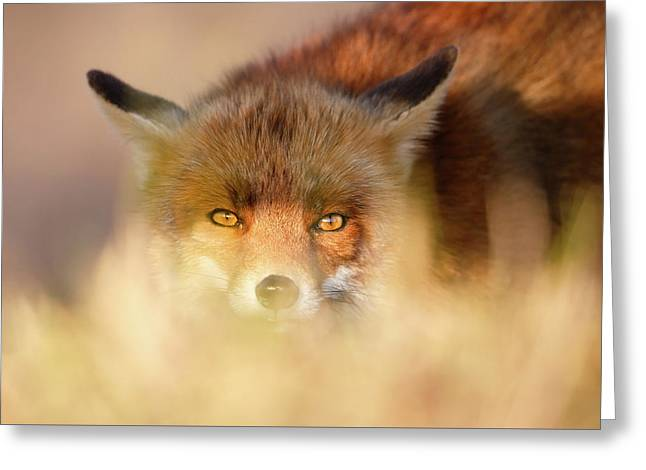 Watching The Watcher - Hunting Red Fox Greeting Card by Roeselien Raimond