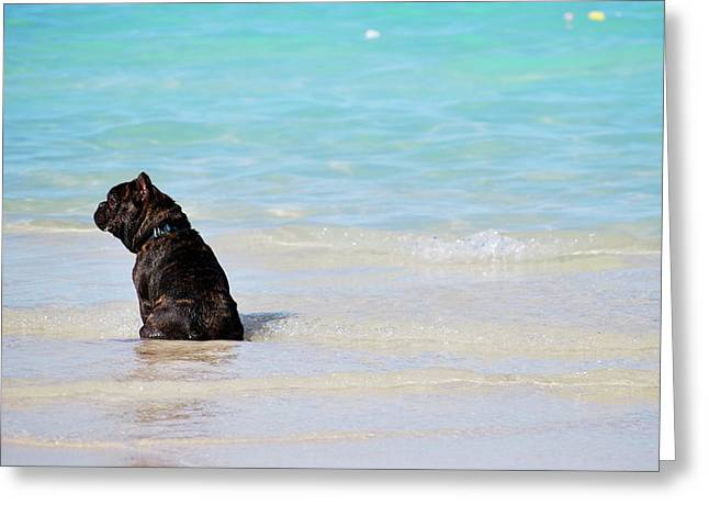 Greeting Card featuring the photograph Watching The Waves by Amee Cave