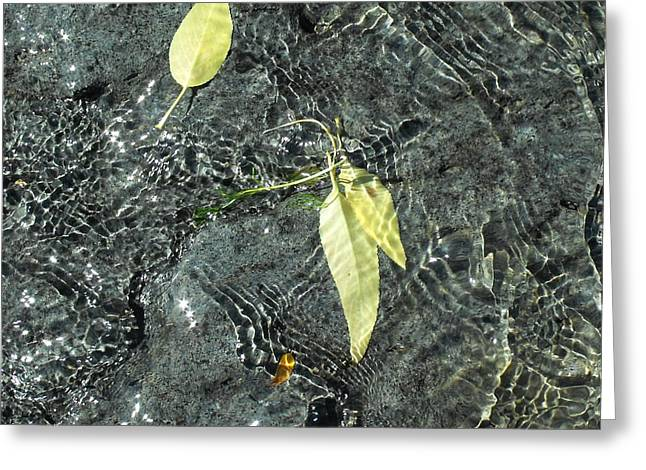 Water And Leaves Greeting Card