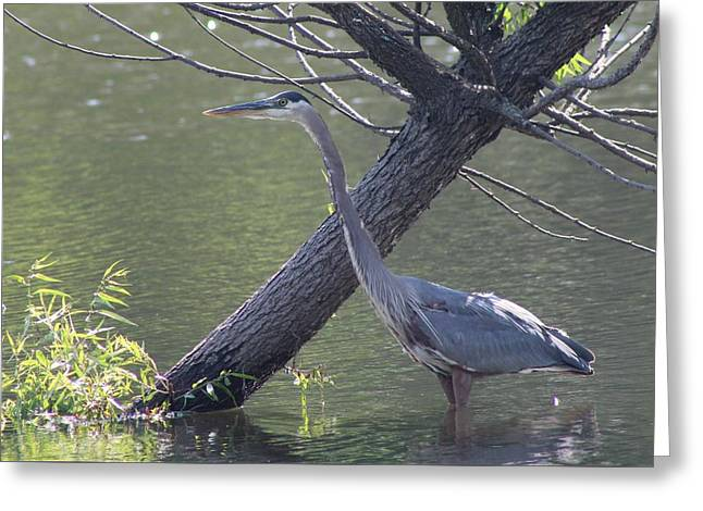 Water Bird And River Tree Greeting Card