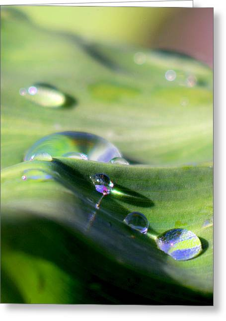 Water Drop-0081 Greeting Card by Sean Shaw