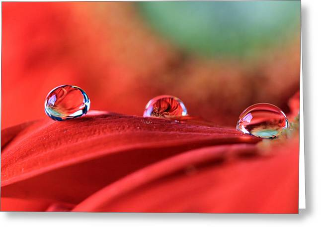 Water Drop Reflections Greeting Card