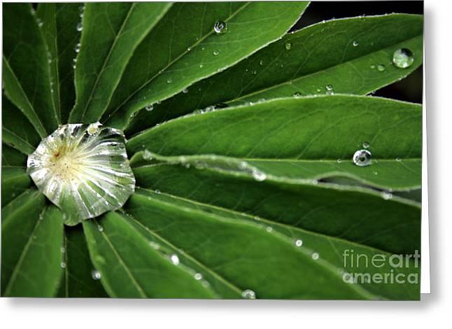 Water Drop Greeting Card by Marta Grabska-Press