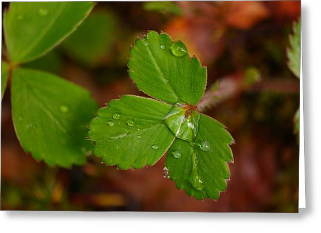 Water Drop On A Green Plant Greeting Card