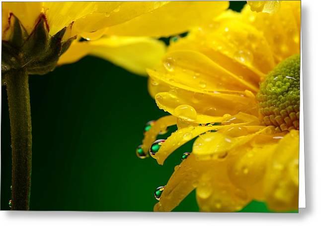 Water Drop Reflections I I Greeting Card by Laura Mountainspring