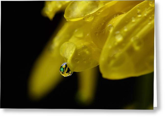 Water Drop Reflections Greeting Card by Laura Mountainspring