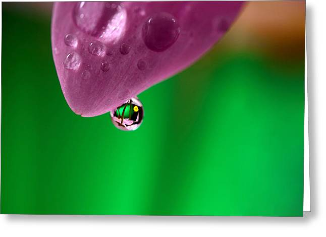 Water Drop Reflections With Purple Greeting Card