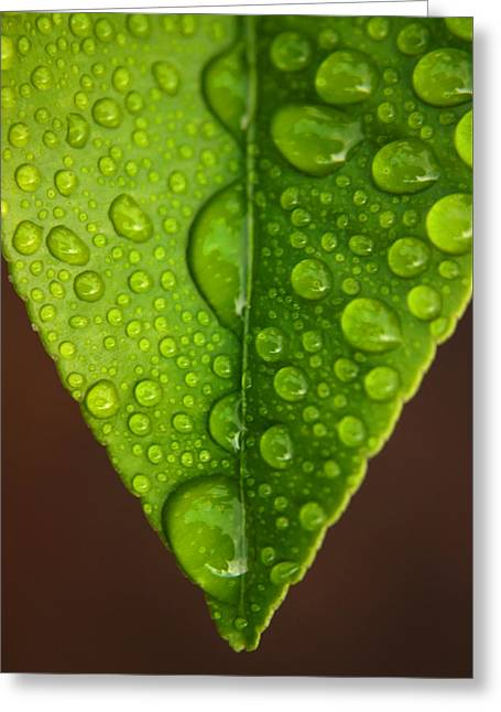 Water Droplets On Lemon Leaf Greeting Card by Ralph A  Ledergerber-Photography