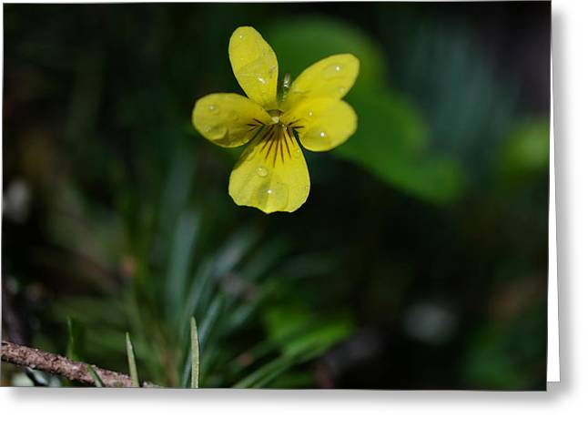 Water Drops On A Yellow Blossom Greeting Card by Jeff Swan