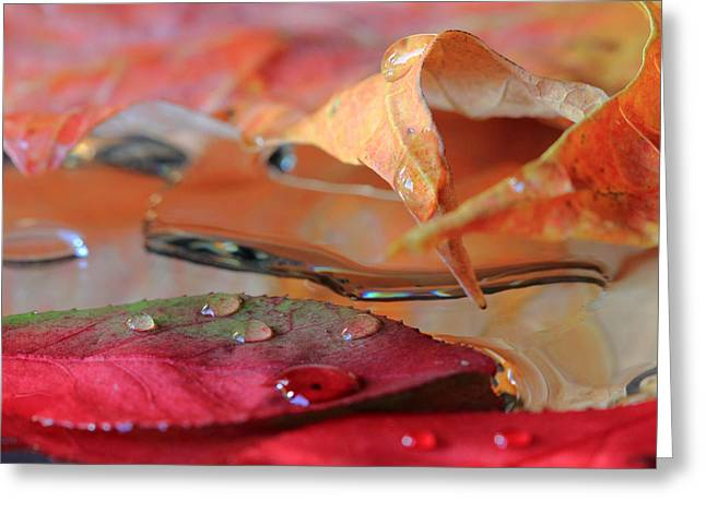 Water Drops On Autumn Leaves Greeting Card
