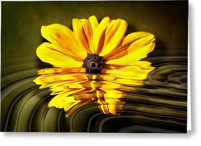 Greeting Card featuring the photograph Water Flower by Gary Smith