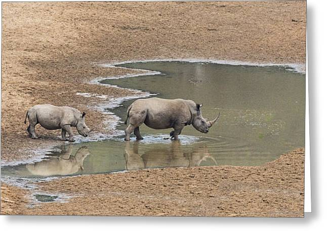 Water For Rhinos Greeting Card by Stephen Stookey
