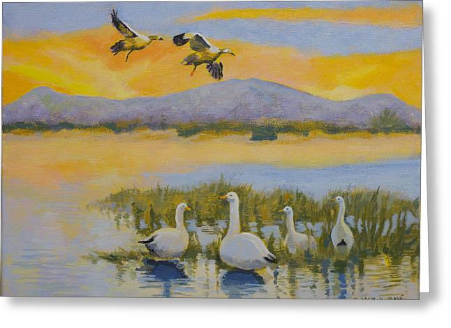 Water Fowl, Sutter Buttes Greeting Card