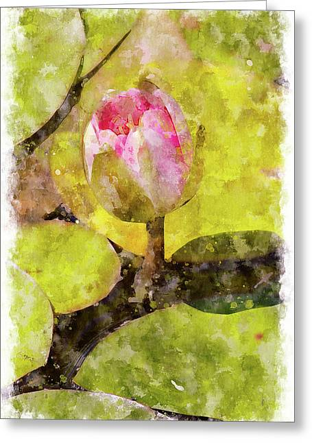 Water Hyacinth Bud Wc Greeting Card by Peter J Sucy