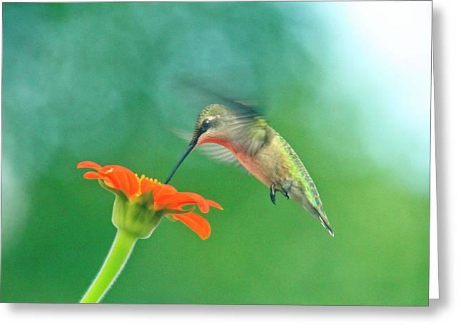 Hummingbird And Zinnia With Sun Glare Greeting Card
