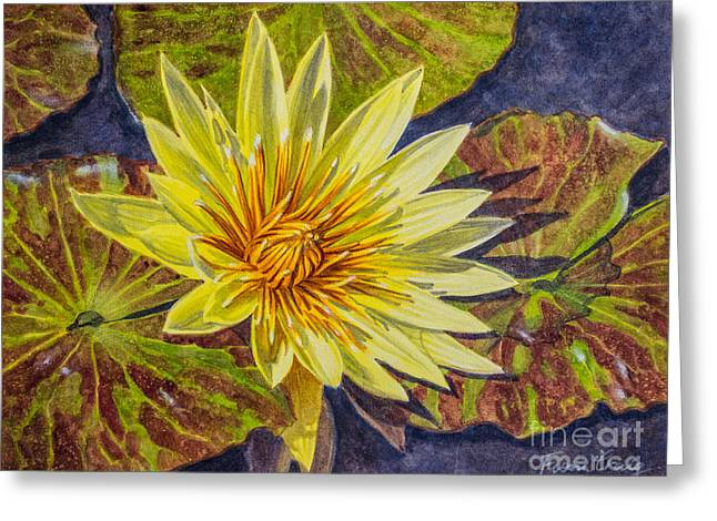 Water Lilies 2 Greeting Card by Fiona Craig