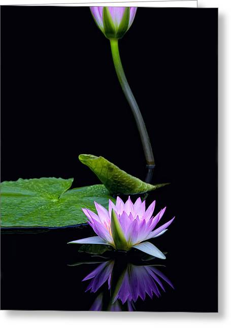 Water Lilies And Reflections Greeting Card by Margaret Barry